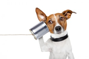 Dog listening to can phone