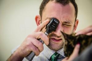 doc eye exam Center City Veterinary Hospital, photographer Steve Belkowitz.