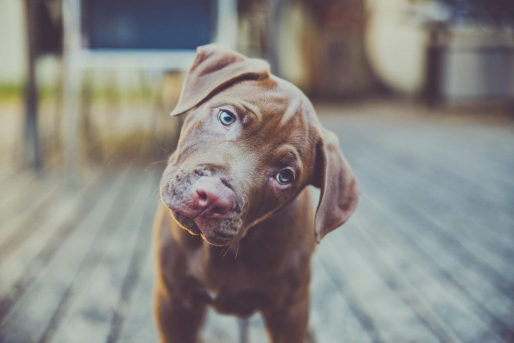 o-DOG-COCKED-HEAD-facebook