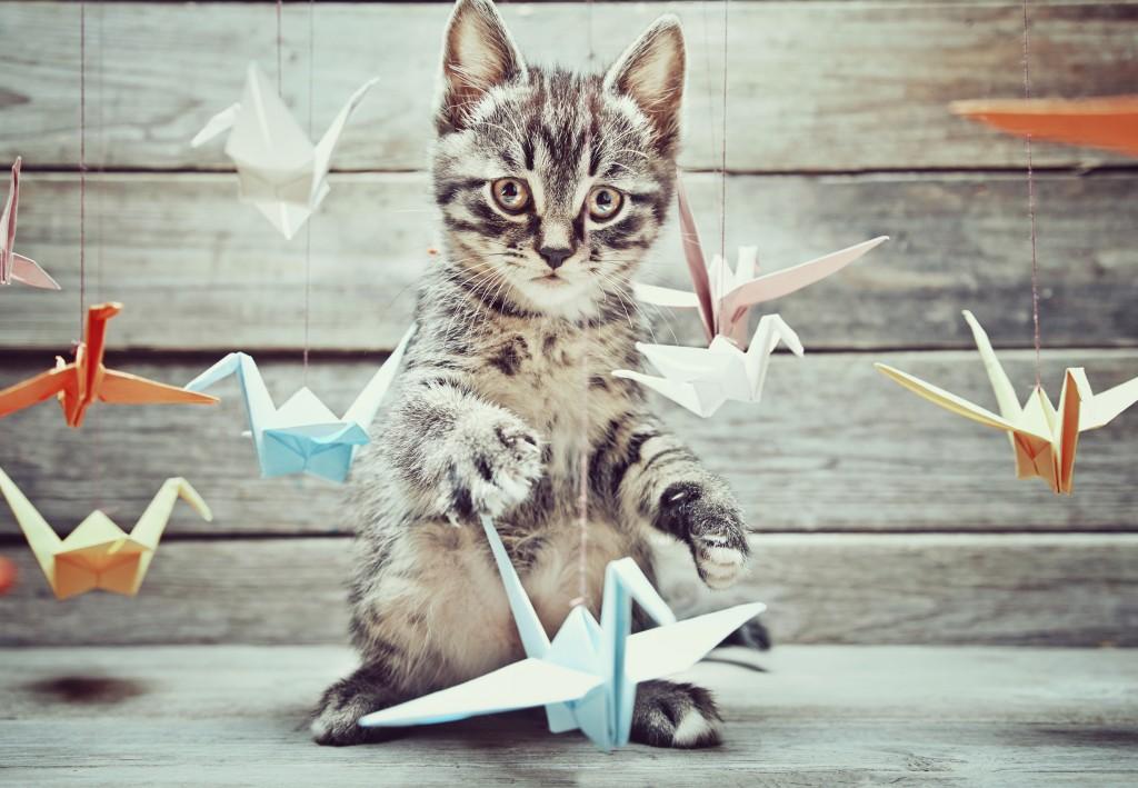 Cat with origami cranes