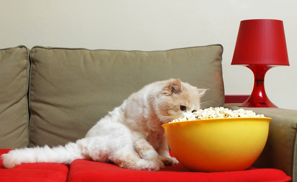 Cat Eating Popcorn watching movies featuring pets