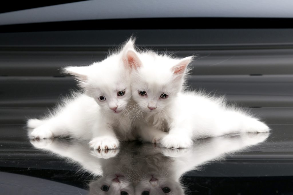 These cats did not have a data backup and are sad.