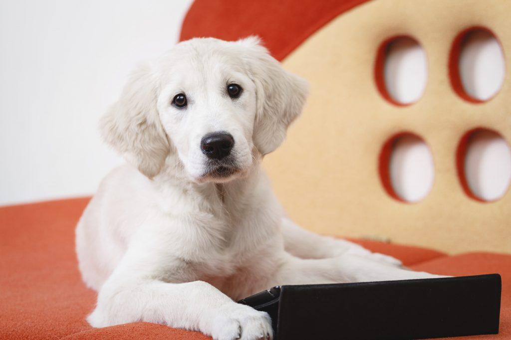 Dog looking at veterinary websites