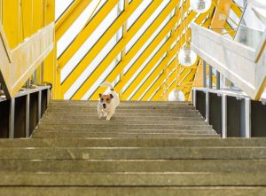 A dog running down a stairs