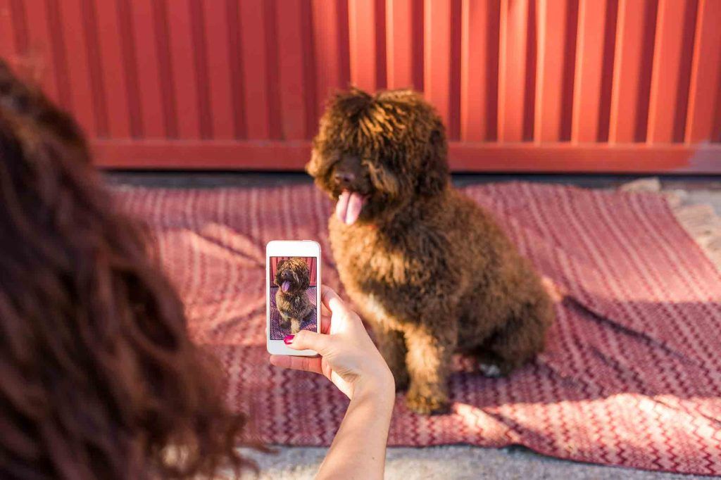 A shaggy dog being photographed