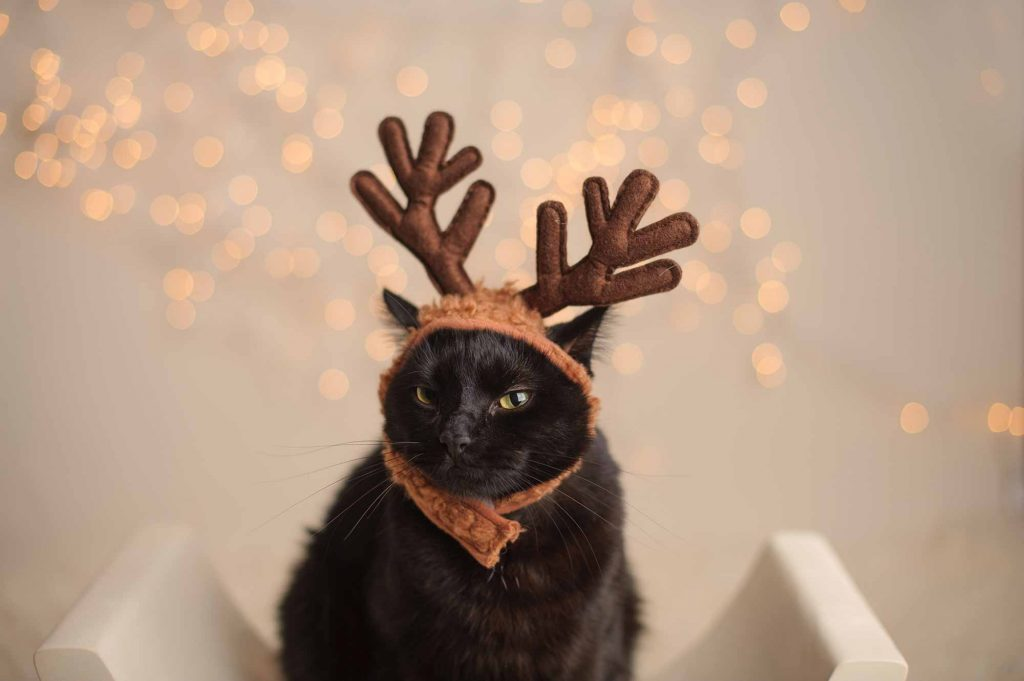 A cat wearing costume antlers