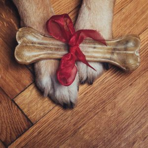 A gift of a bone for a lucky dog
