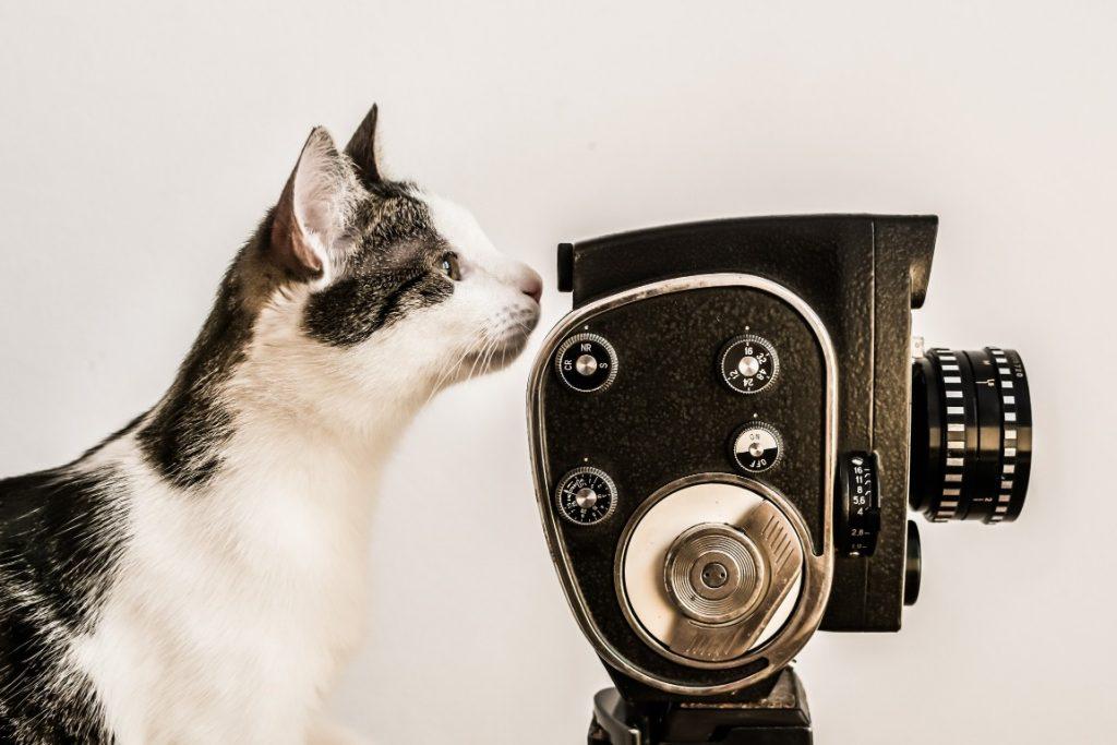 Cat looking through a camera