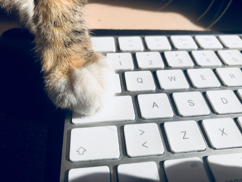 A cat's paw on a keyboard
