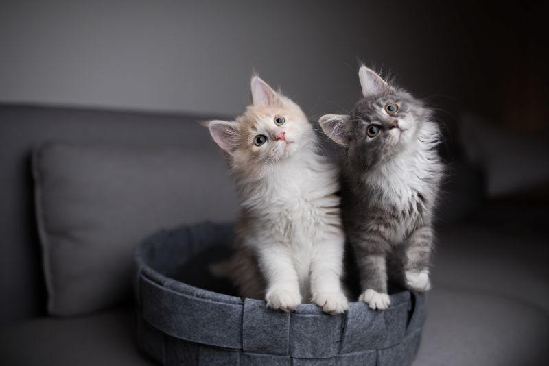 Two cats with tilted heads looking up
