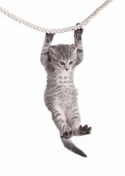 Kitten holding onto a rope