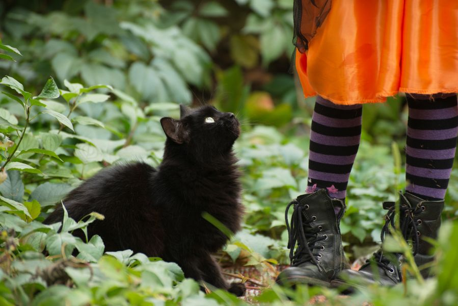 A black cat with their costumed owner