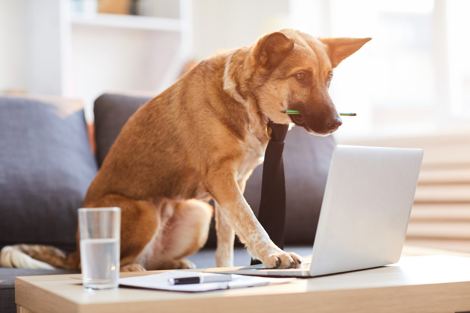 Dog wearing a tie working on a computer