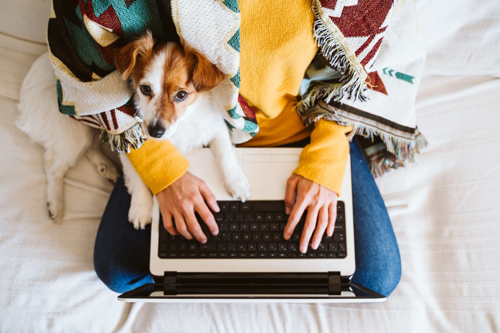 A woman and her dog check out photos on a custom veterinary website.