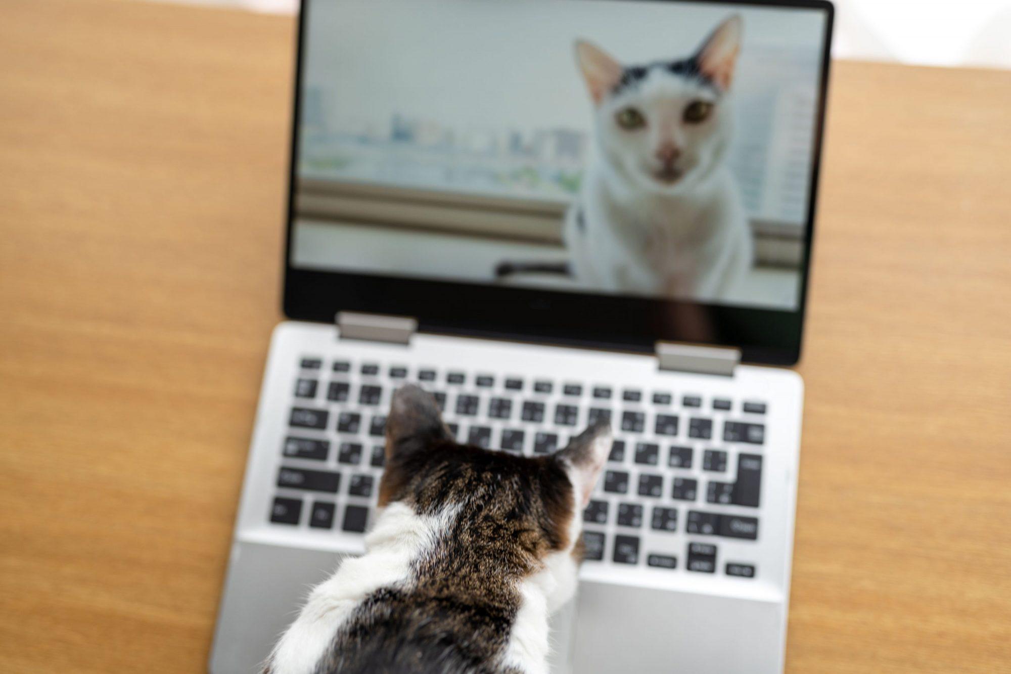 A cat checks out a veterinary website.