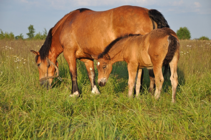 Proper Nutrition For The Foal