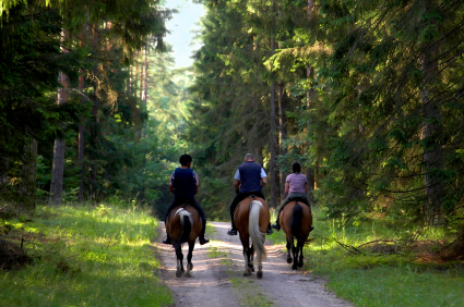 10 Ways to Keep Your Trail Horse Healthy and Sound